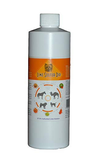 Lime Sulfur Dip for Dogs, Cats & Horses - Formulation for Mange Treatment, Ringworm Treatment, Skin Mites Treatment for Pets and Animals to Help Relieve Itchy Skin (12 oz)