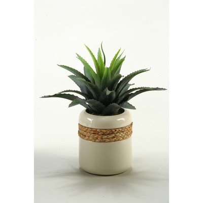 D & W Silks Star Succulent in Round Ceramic Planter, Green (149046)