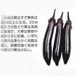 なす 種 【 福竜長なす 】 種子 20ml B00NHDA4VW