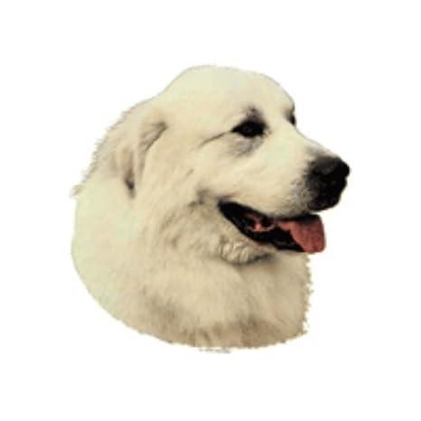 World Stickers schwandt doméstica Animales requisitos 12073 Pegatinas 4 unidades aprox. 80 x 80 mm para warnschild Pirineos Perro: Amazon.es: Productos para ...
