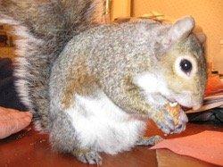 30 Squirrel - 1