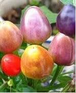 Cuatro estaciones semilla de flor del jardín de semillas fáciles de plantar y fácil de vivir paisaje en maceta de flores siembra de otoño semillas 10seeds