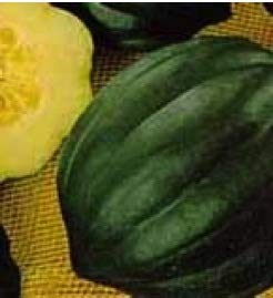 Acorn Squash, Table Queen Live Plants USDA Certified Organic 2 ½ in. Pots -