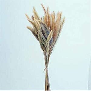 ZJJZH Artificial Decorative Flowers Dried Flower Dog Tail Flower Natural Plant Specimen Dried Flower Foxtail Retro Shop Decoration Kindergarten Decoration Decorative Artificial Flowers 109