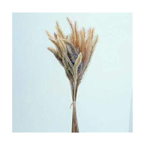 ZJJZH Artificial Decorative Flowers Dried Flower Dog Tail Flower Natural Plant Specimen Dried Flower Foxtail Retro Shop Decoration Kindergarten Decoration Decorative Artificial Flowers