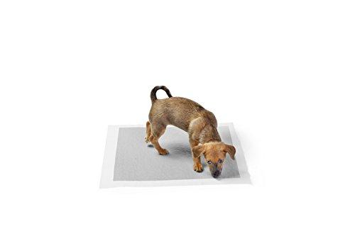 Review AmazonBasics Carbon Pet Training