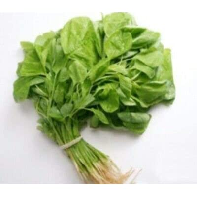 7000+ 1/4-oz Edible Amaranth (VRZ) Seeds Green Leaf 白莧菜 Heirloom Non-GMO : Garden & Outdoor