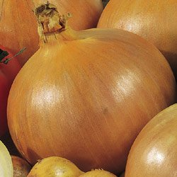 Best onion seeds candy onion list