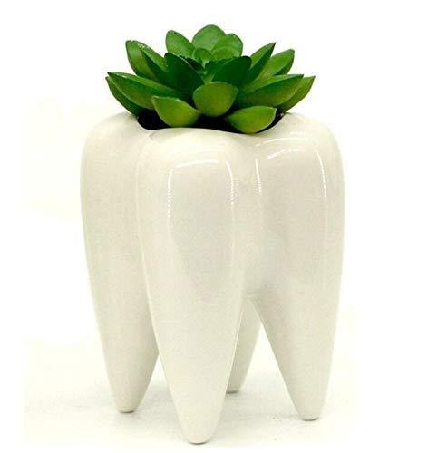 Mecai Tooth Design White Mini Ceramic Plant Flower Pot Succulent Planter,Dentist Gifts for Men Women Office Desk Ornament