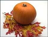 50 JACK O LANTERN PUMPKIN Cucurbita Maxima Seeds (Grow 100 pound pumpkins!)