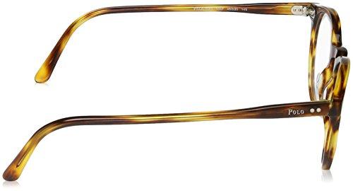 Polo Ralph Lauren ph2083 lunettes en noir brillant PH2083 5001 48 Havana Striped Clear