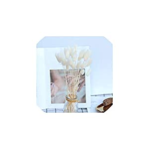 Fashion-LN 20Pcs Natural Dried Flowers Colorful Lagurus Ovatus Real Flower Bouquet for Home Wedding Decoration,4 10