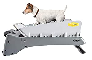 3. DogTread Small Dog Treadmill