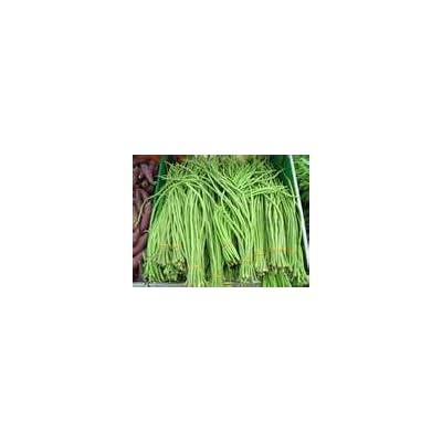 HeirloomSupplySuccess 10 Heirloom yardlong Yard Long Bean Vigna Unguiculata Seeds : Vegetable Plants : Garden & Outdoor