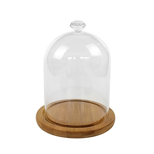 ReFaXi Clear Glass Bell Jar Dome Flower Display Jar Vase with Wooden Base (Diamond)