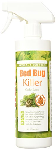The 8 best spray pesticides for bed bugs