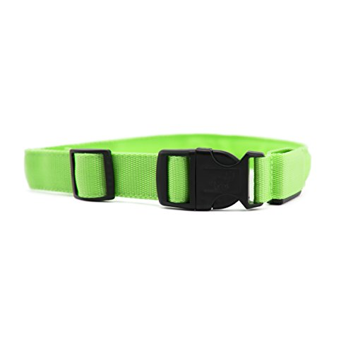 Utopia Safety Pet Collar w/ Colored Flashing LED Light, USB Rechargeable Battery (XL, - Duty Free Miami