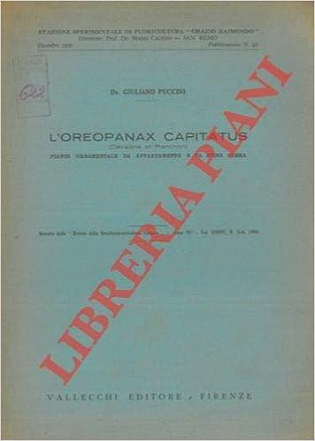 Piante Da Appartamento Amazon.L Oreopanax Capitatus Pianta Ornamentale Da Appartamento E Da