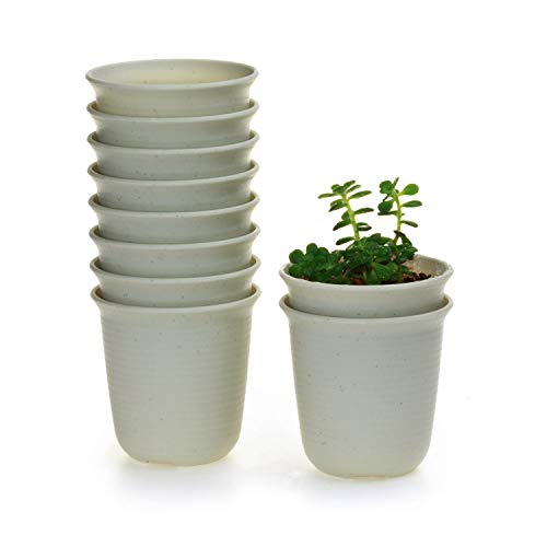 T4U 3 Inch Plastic Round Succulent Plant Pot/Cactus Plant Pot Flower Pot/Container/Planter Package 1 Pack of 10]()