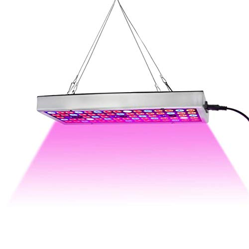 LED Grow Lights Full