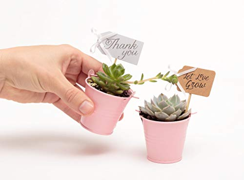 2 in. Wedding Event Rosette Succulents with Pink Metal Pails and Thank You Tags (30) by Succulent Source (Image #3)