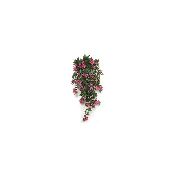 42″ Bougainvillea Bush – Fuchsia | Indoor