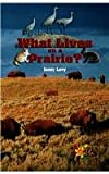 What Lives on a Prairie?, Janey Levy, 0823937011