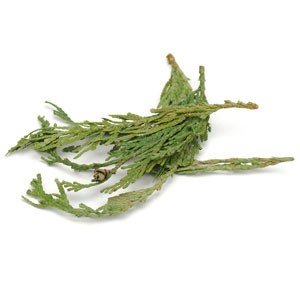 Starwest Botanicals CEDAR TIPS WESTERN RED WC