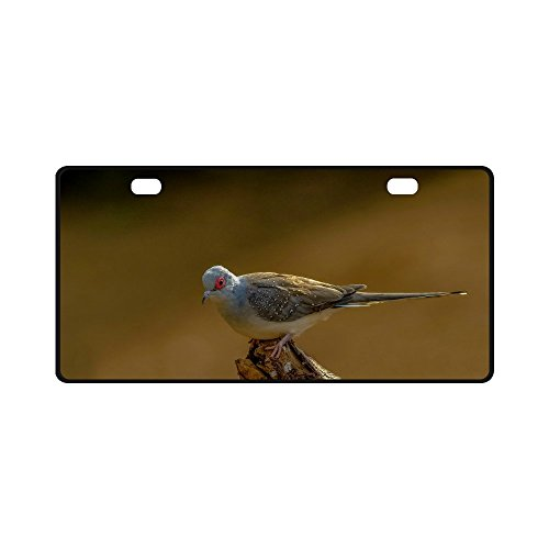 Personalized Human Skeleton Car Auto Tag Metal License Australian snow pigeon (11.8 inch X 6.1 inch) ()