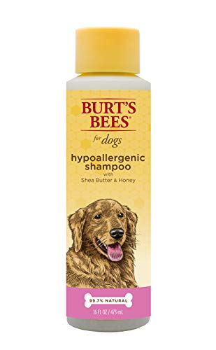 (Burt's Bees for Dogs Natural Hypoallergenic Shampoo with Shea Butter and Honey| Puppy and Dog Shampoo, 16 Ounces)