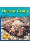Hermit Crabs, Lola M. Schaefer, 158810723X