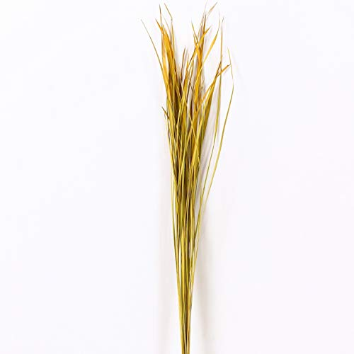 Dried colored natural grass bunch for floor vases decorative twig bunch, 0.4x47 inches,  Yellow