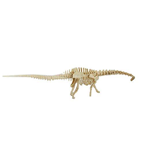 Transer- Dinosaur Fossil Skeleton Figures, Assorted Dinosaur Fossil Toys Bones Model Kit for Kids, Boys, Girls, Pretend, Play Time, Games, Party, Start Your Own Dinosuar Museum (Diplodocus)