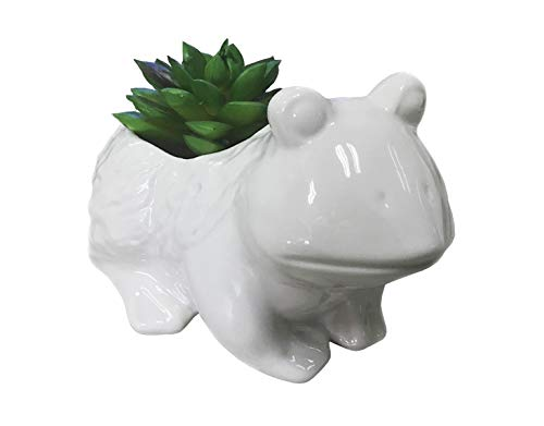 Animal Ceramic Plant Pots, 5 inch Cute Big Mouth Frog Succulents Flower Pots with White Glazed Indoor.