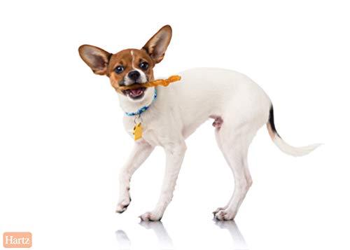 Hartz Oinkies Tender Treats Natural Smoked Chicken Twist Dog Treat Chews - 36 Pack by Hartz (Image #3)
