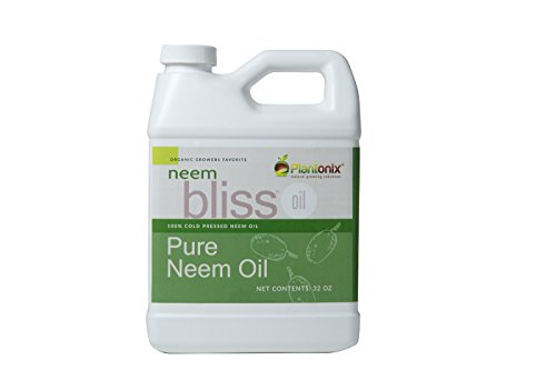 Neem Bliss 100% Pure Cold Pressed Neem Seed Oil 32 oz/1 Quart – High Azadirachtin Content – for Indoor and Outdoor Plant Spray – Plant Care, Pet Care, Skin Care, Hair Care For Sale