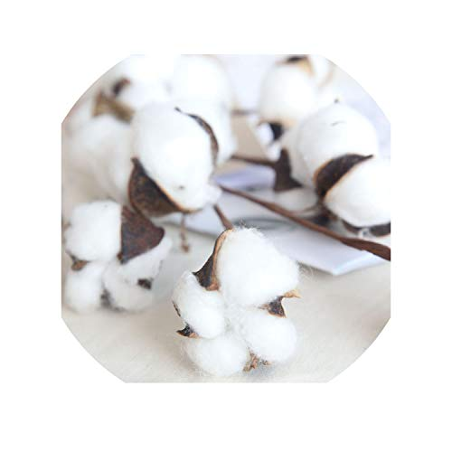21 inch Naturally Dried Cotton Stems Farmhouse Style Artificial Flower Filler Floral Decor The Exhibition Art Wedding L4,Cotton ()