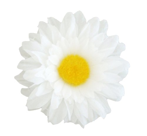 6 pieces of 3-1/2 inch english daisy, soft yellow bristle in center, short plastic cap at back, color white.