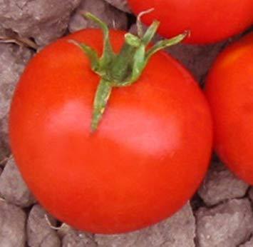 Heinz Tomato Seeds - VISA STORE 5 Packs of 25 Seeds Heinz 9129 Organic Tomato Seeds