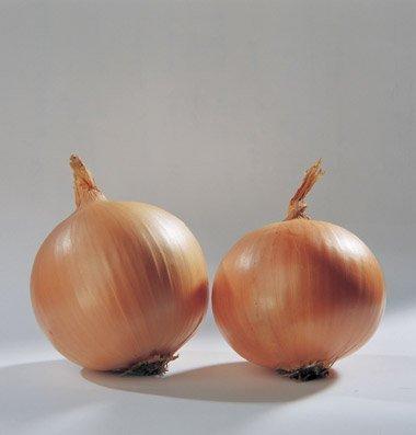 David's Garden Seeds Onion Cortland D2581 (Yellow) 200 Organic Hybrid Seeds (Apple Fritter Glaze Recipe)