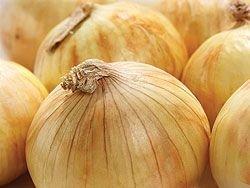 Yellow Sweet Spanish Onion Seeds, 750+ Premium Heirloom Seeds, 99.9% Purity, (Isla's Garden Seeds), Non GMO Organic, 85% Germination