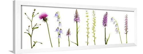 ArtEdge Meadow Flowers, Fleabane Thistle, Bearded Bellfower, Common Spotted Orchid, Twayblade, Austria Wall Art Framed Print, 12x36, White ()