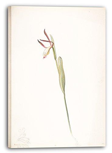 Printed Paintings Impresión Sobre Lienzo (40x60cm): Margaret ...