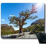 High quality, is not easy to bad Mouse Pad Nature Rectangle 8.66 in X 7 in Suitable for carry MP121211