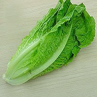 3000 PARRIS ISLAND COS ROMAINE LETTUCE Lactuca Sativa Vegetable Seeds
