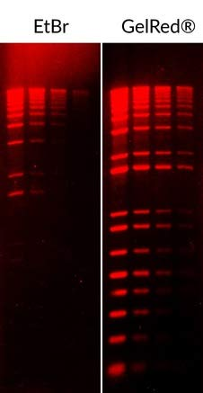 - GelRed Nucleic Acid Gel Stain 10,000x in Water