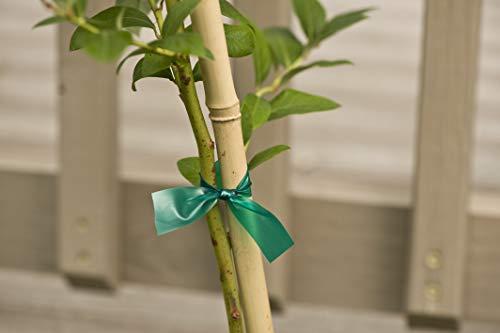 Gardener's Blue Ribbon T006B Sturdy Stretch Tie by Gardener's Blue Ribbon (Image #5)