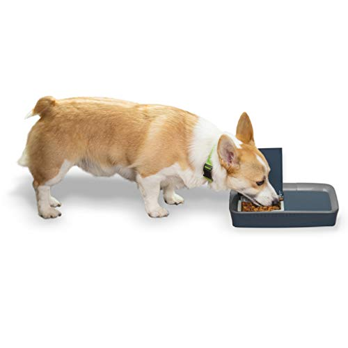 PetSafe Automatic 2 Meal Dog and Cat Feeder, Dispenses Dog Food or Cat Food (Wet Dog Food Dispenser)
