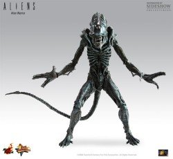 Sideshow Collectibles Hot Toys Aliens Deluxe 16 Inch Model Figure Alien (Alien Warrior Model)