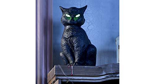 Halloween Animated Black Cat -